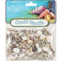 Craft Shells 50/Pkg NOTM246738