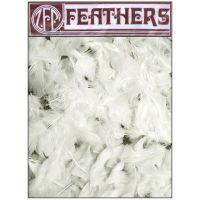 Turkey Plumage Feathers   NOTM129117