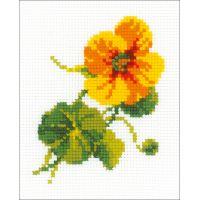 Nasturtium Counted Cross Stitch Kit NOTM273973