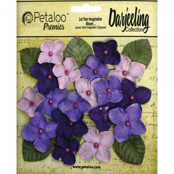 """Darjeeling Hydrangeas 1"""" - 1.5"""" 24/Pkg"""