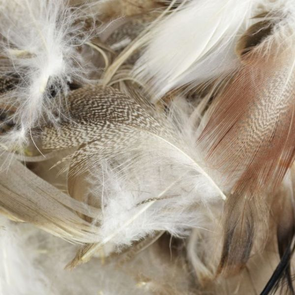Domestic Goose Feathers 6g