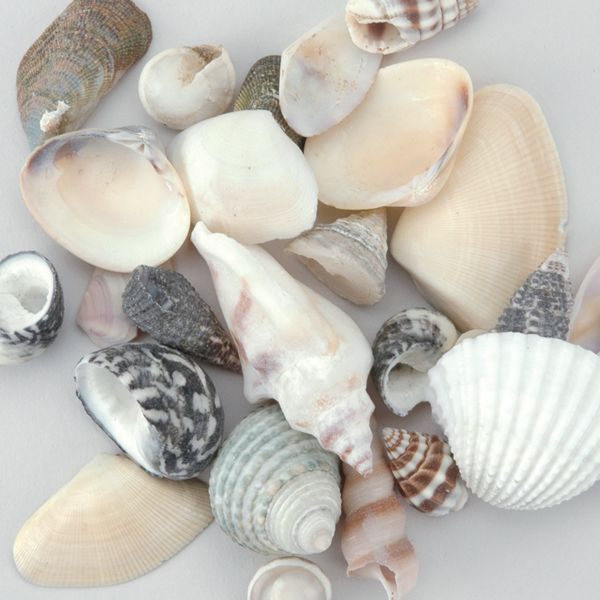 Sea Shell Mixes 25/Pkg