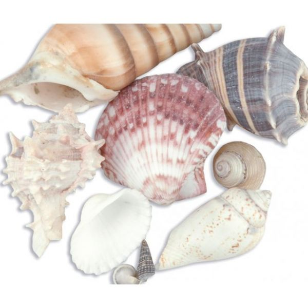 Sea Shell Mixes 10/Pkg