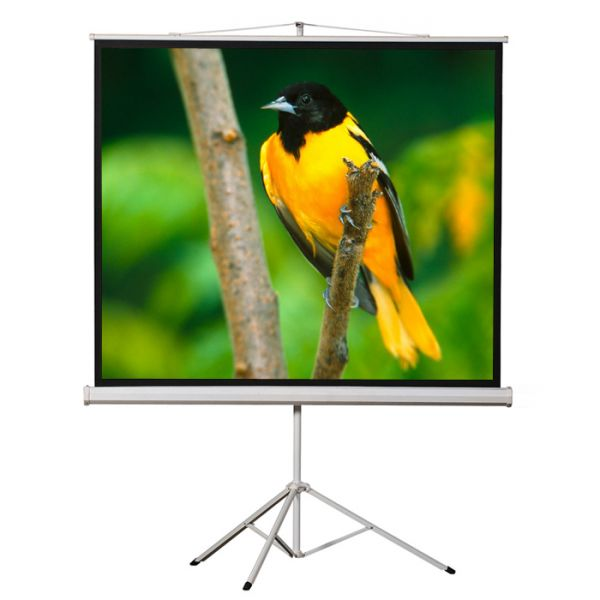 "EluneVision Tripod Projection Screen - 71"" - 1:1 - Surface Mount"