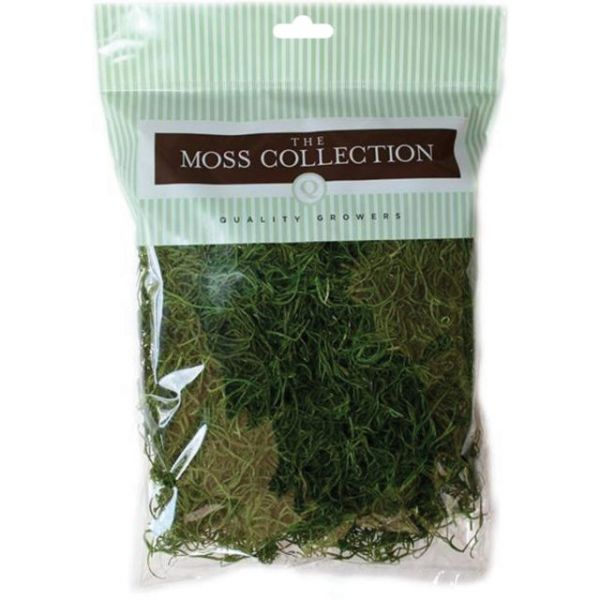 Preserved Spanish Moss
