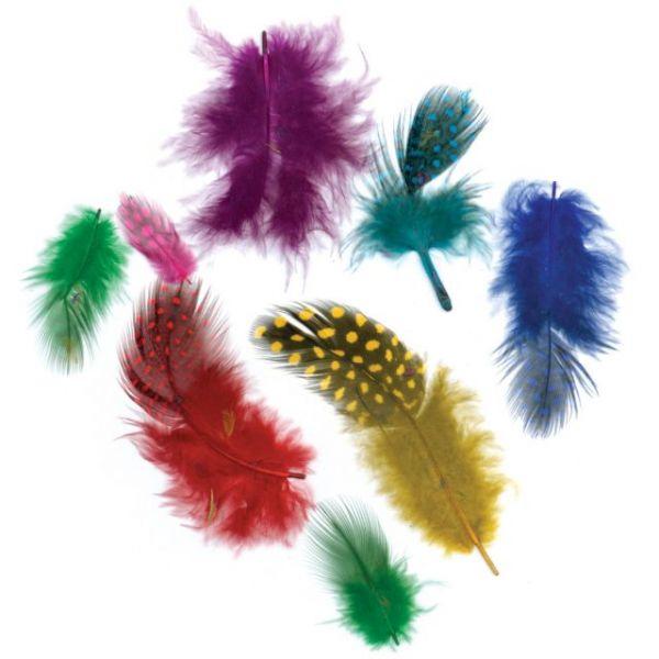 Guinea Plumage Feathers
