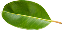 green products for safer environment